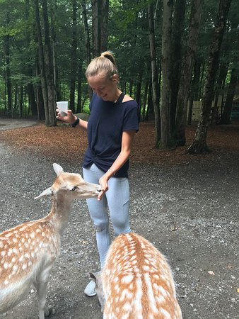 Gloversville, NY: Beautiful and natural setting to interact with the animals.