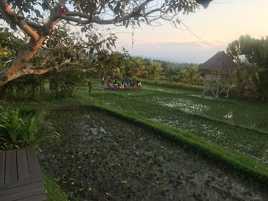 Sanak Retreat Bali 사진