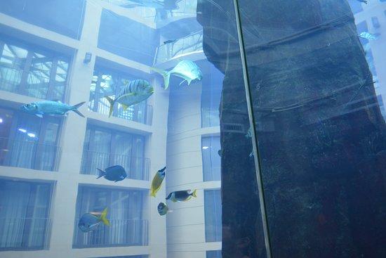 AquaDom & SEA LIFE 베를린 입장권 이미지