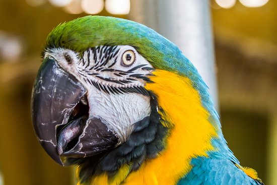 Parrot Mountain & Gardens: My new friends.
