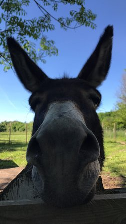 Notre âne Cadichon ♥️