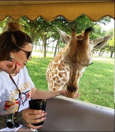 Best animal experience!