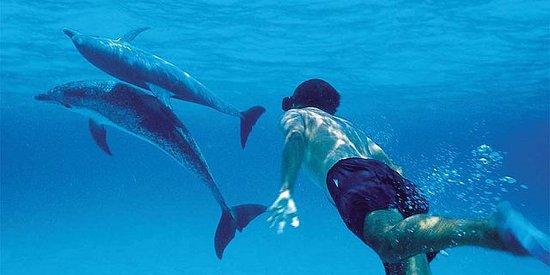 Swim with dolphins in west coast