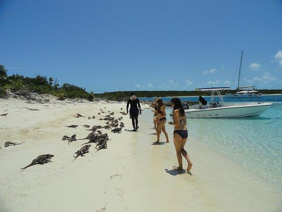 Tour de medio día en barco: Feeding the iguanas.