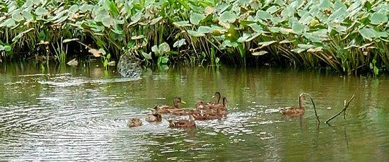 写真Kenilworth Park and Aquatic Gardens枚