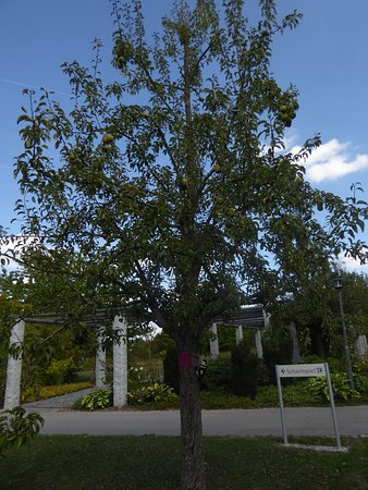 Sibyllenbad: Der Kurgarten (7)