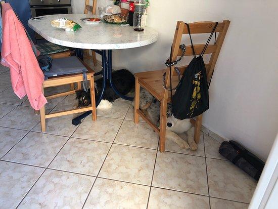 Sveti Petar, Croacia: Tiszta, igényes hely kedves vendéglátókkal. Angolul sajnos senki nem beszél, de activityzni lehet velük. Mi 5-en érkeztünk 4 kutyával, amit az emailozásból nem fogott fel a vendéglátónk, de legalább itt maradhattunk. A kutyákért 5 euró/éj árat számolt fel. Minden szoba parkettás, a többi helyiség járólapos. A konyha jól felszerelet.