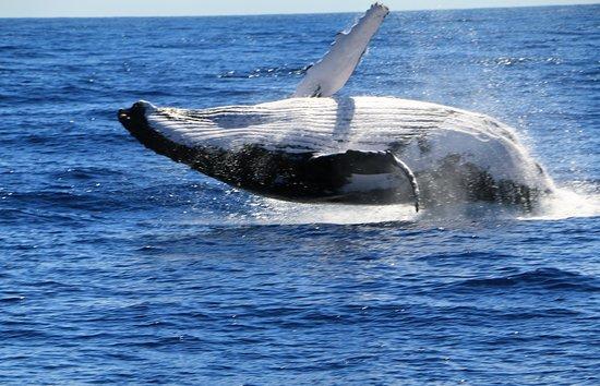 Le Port, Reunión: Baleine à bosse