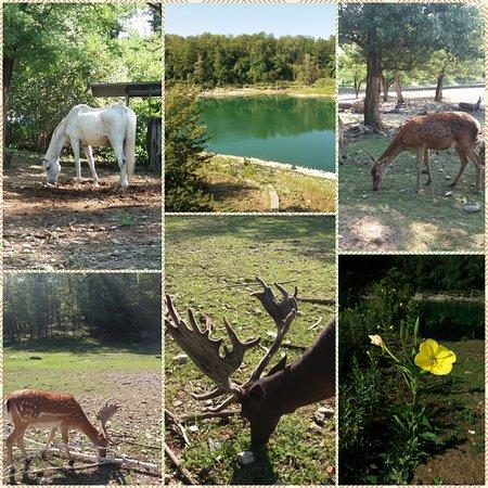 Gerenzano, Italia: Flora e fauna del parco