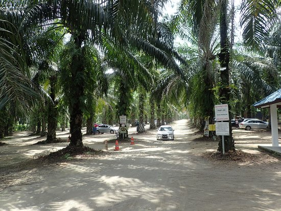 The car park in the oil palm estate.