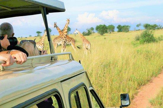 Vienna Uganda Tours And Travel LTD
