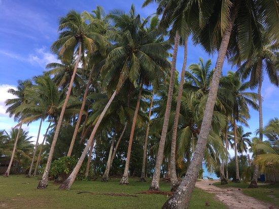Tamanu Beach Resort: tamanu beach resort