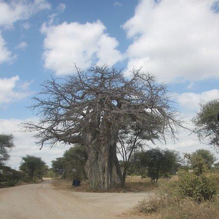 Augustine's Adventure Africa照片