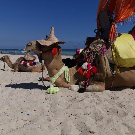 Residence Djerba Azur: Plage Djerba Guellala