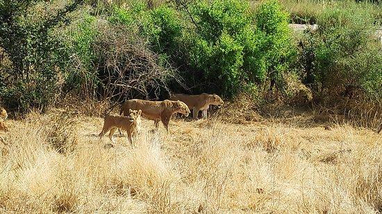 Kruger Nationalpark-billede
