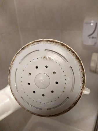 A whole new ecosystem on the shower head!