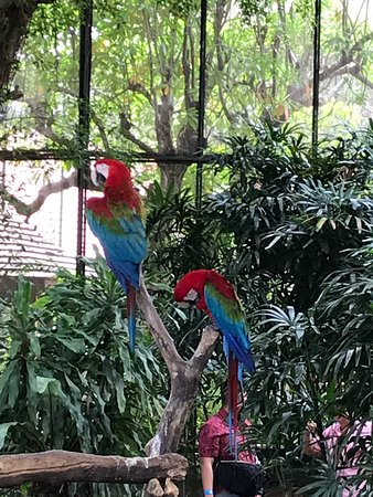 Butterfly Park and Insect Kingdom Admission Ticket: Red and Green Macaw