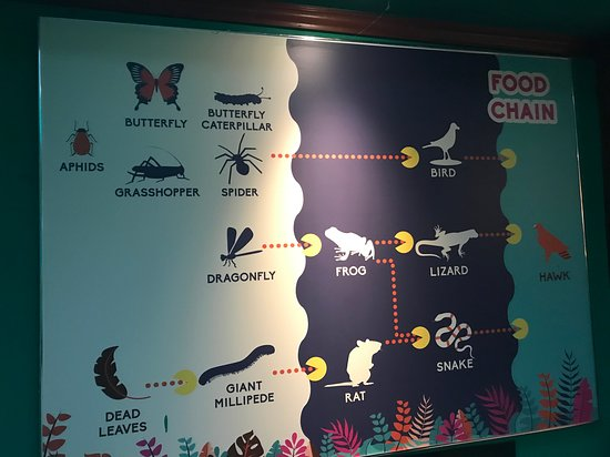 Butterfly Park and Insect Kingdom Admission Ticket: Food chain poster