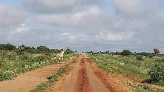Национальный парк Цаво Восток, Кения: Park