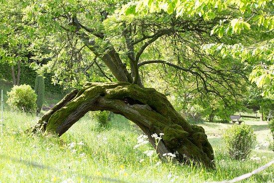 Seminarhotel Fohlenweide: Baumdurchgang (Teil des entstehenden Meditationspfades)