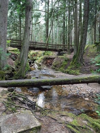 One of several wooden bridges  (red trail!)