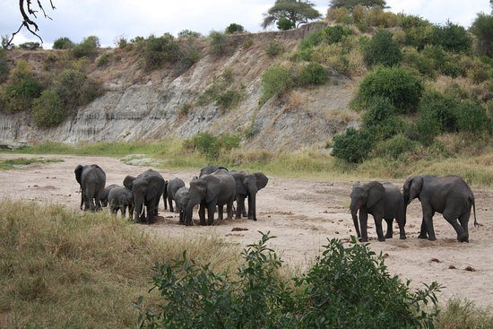 Back To Africa Tours & Safaris: Drinking Elephants