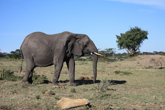Back To Africa Tours & Safaris: Elephant