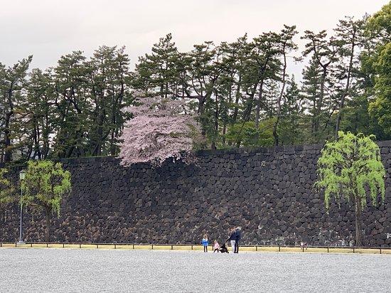 Wall & Moat--Imperial Palace--Tokyo, Japan
