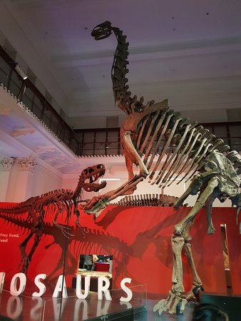 Australian Museum (Sydney): UPDATED 2019 All You Need to