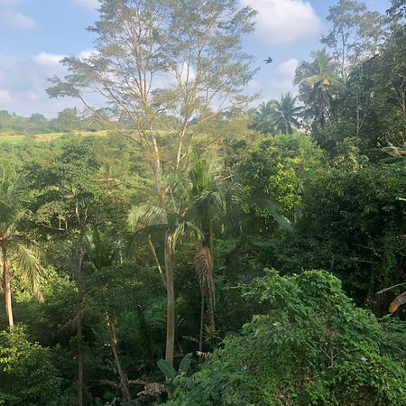 Views from our room at Ubud's Prashanti