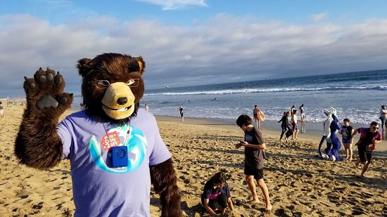 Habit Burger Grill: Joe Bear on the beach at Bolsa Chica (Near 'The Habit' - Huntington Beach)