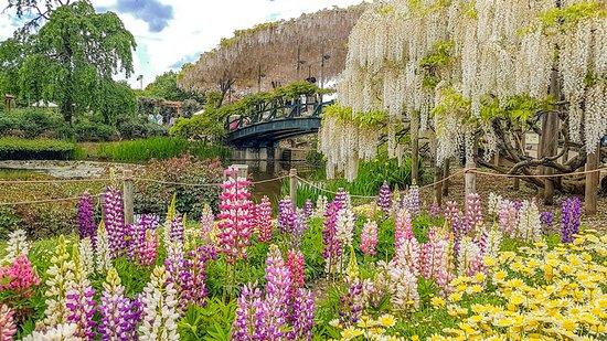 Ashikaga Flower Park Illumination Admission Ticket: Spring flowers and more wisteria