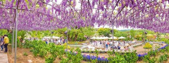 Ashikaga Flower Park Illumination Admission Ticket: Beneath one massive wisteria vine