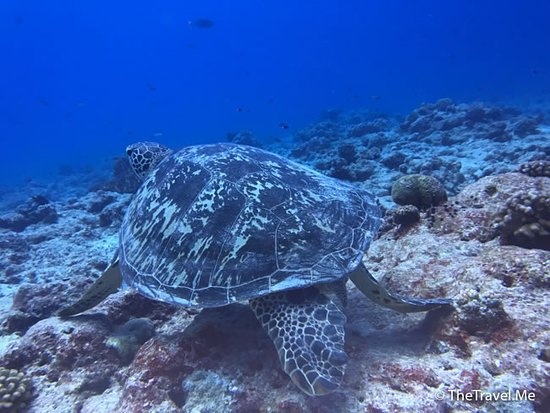 Melekeok, Palau: Big Drop-off