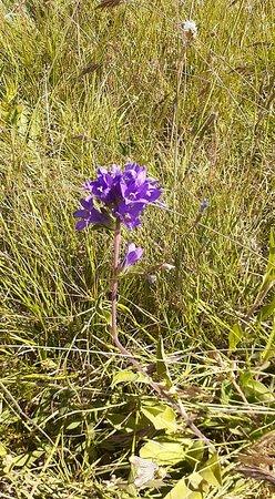 Vayk, Armenia: #Vayots Dzor Province, Amenia #Flora