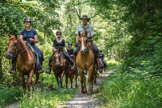 Horses on Breg