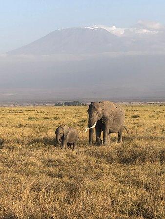 Wildebeest Safaris-billede