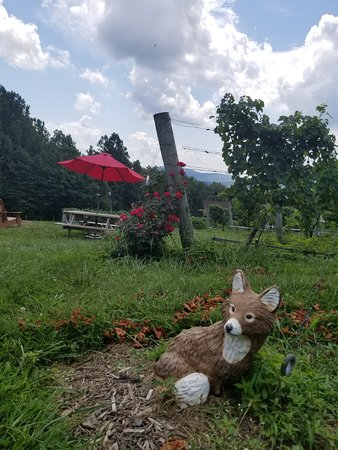 Linden, VA: The fox, grapes and red umbrellas