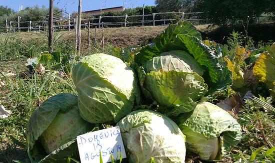 Agriturismo Antico Pozzo degli Ulivi: Marialuisa D.