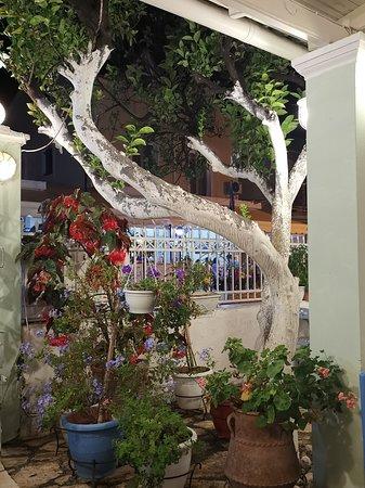 Ottimo ristorante, personale cortese e ambiente familiare. Calmo, musica locale discreta, curato con un adorabile spazio fiorito. Un gatto rosso accoglie i clienti 😻