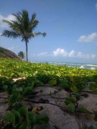 Dunas de Marapé no estado de Alagoas perto de Maceió lugar lindo e pouco visitado, com belezas naturais que incluem um misto de mar e manguezal....