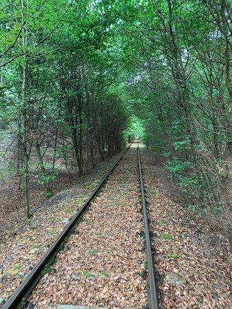 Dargun, Almanya: Durch den Baumtunnel.