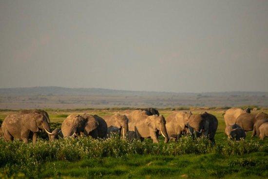 Opuk Kenya Safaris