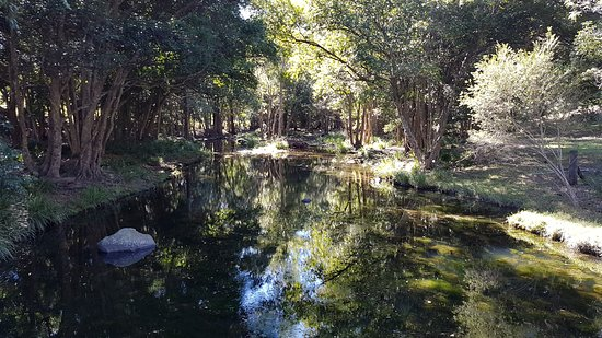 Samford, أستراليا: Cedar Creek