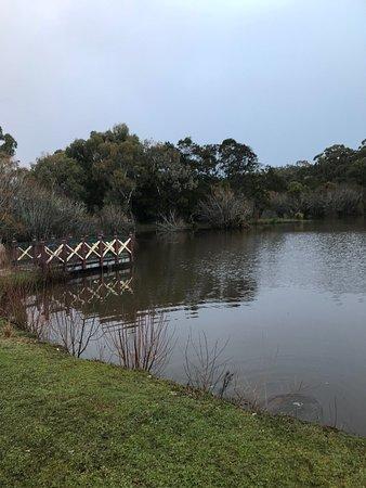 Wombat Flat Mineral Spring