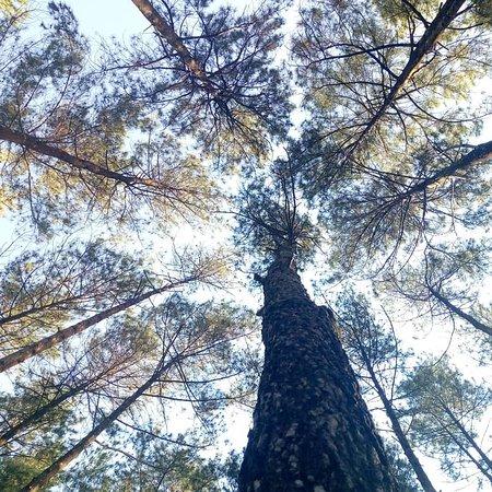 Wonosari, Индонезия: Wisata alam di Gunungkidul