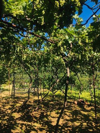 Khidistavi, Georgia: Peradzes'Ranch