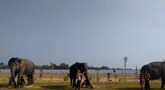 Un día en la granja de elefantes, Jaipur: 1