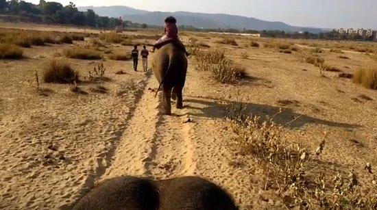 Un día en la granja de elefantes, Jaipur: 3