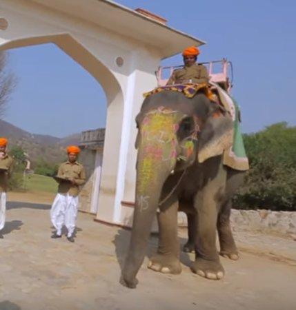 Un día en la granja de elefantes, Jaipur: 4